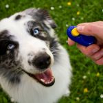 How To Clicker Train Your Dog and Other Pets