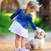basic commands for puppy training