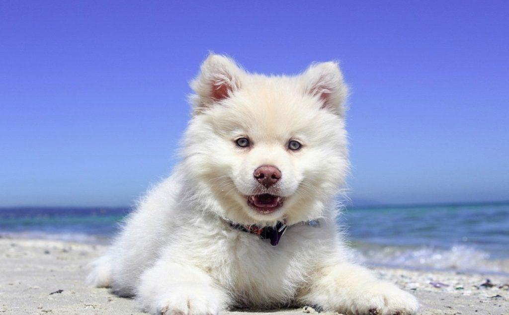 dog lay command training