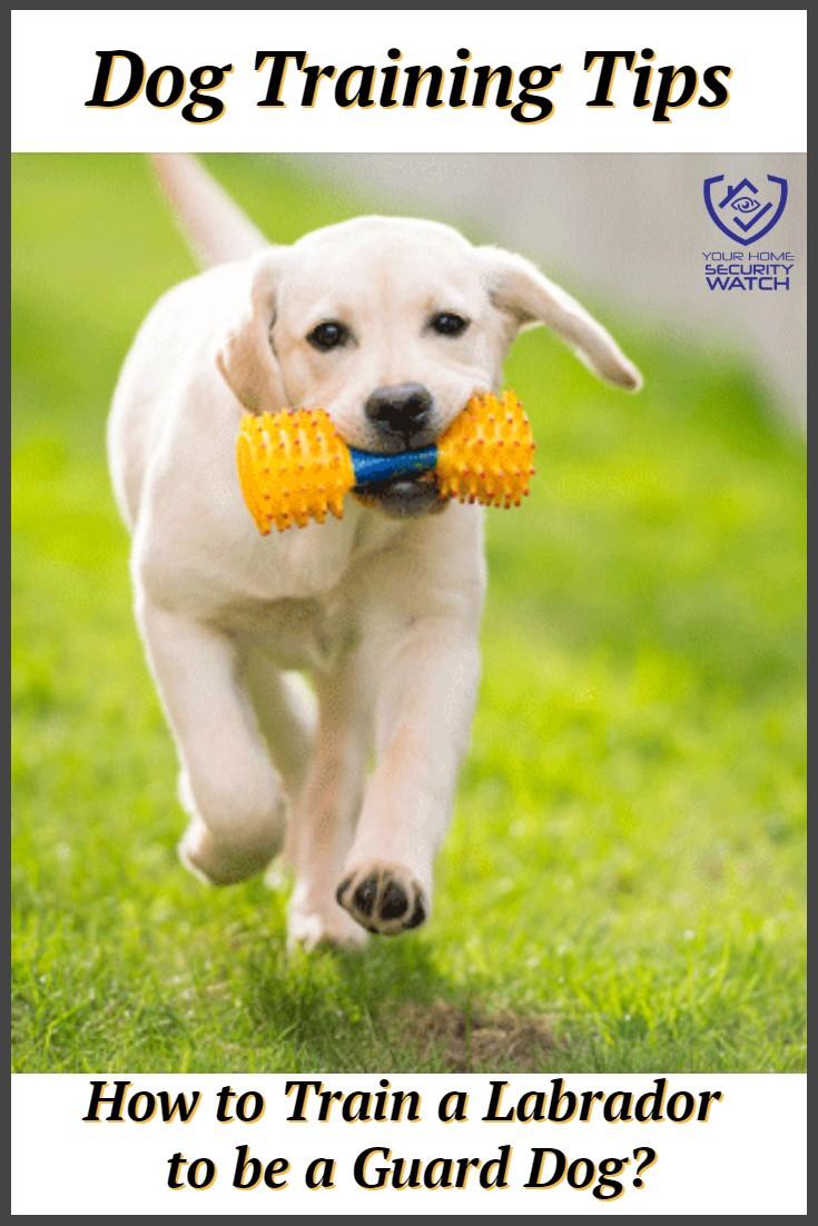 Guard Dog Training For A Labrador