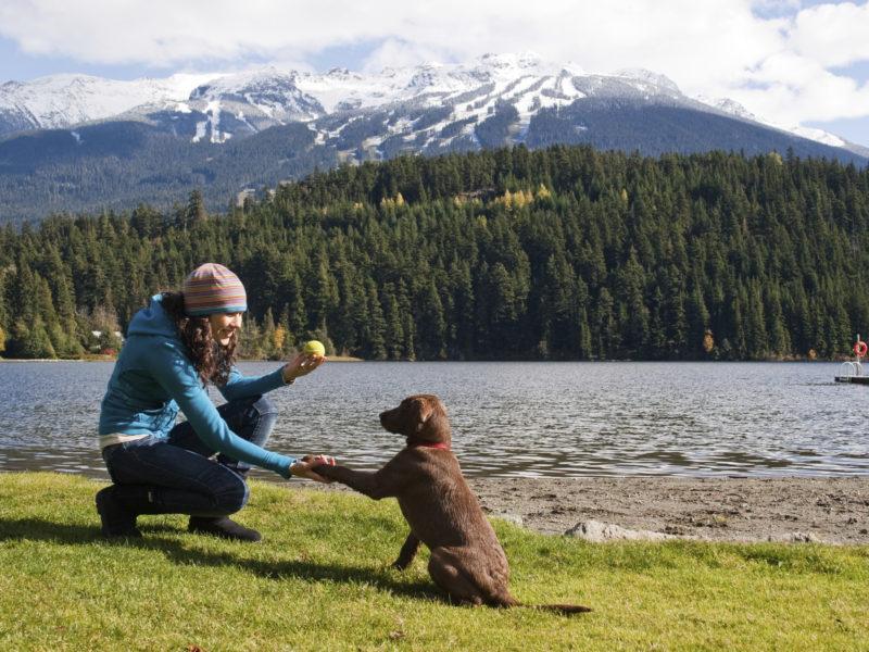 labrador outdoor training