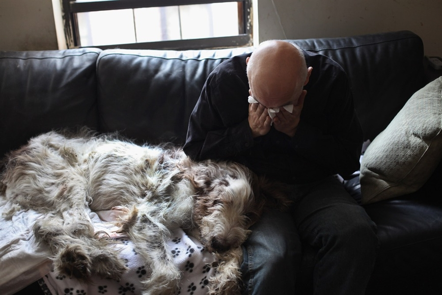nice-dog-euthanasia-at-home-on-veterinarian-performs-in-home-pet-euthanasia-in-new-york-city-photos-dog-euthanasia-at-home