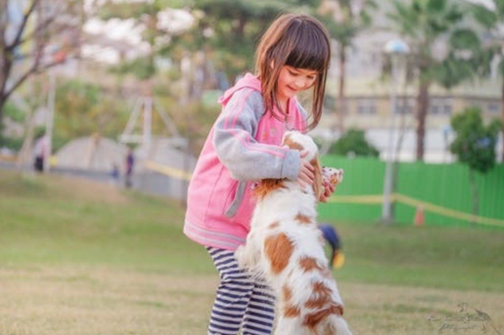 teaching your dog to come