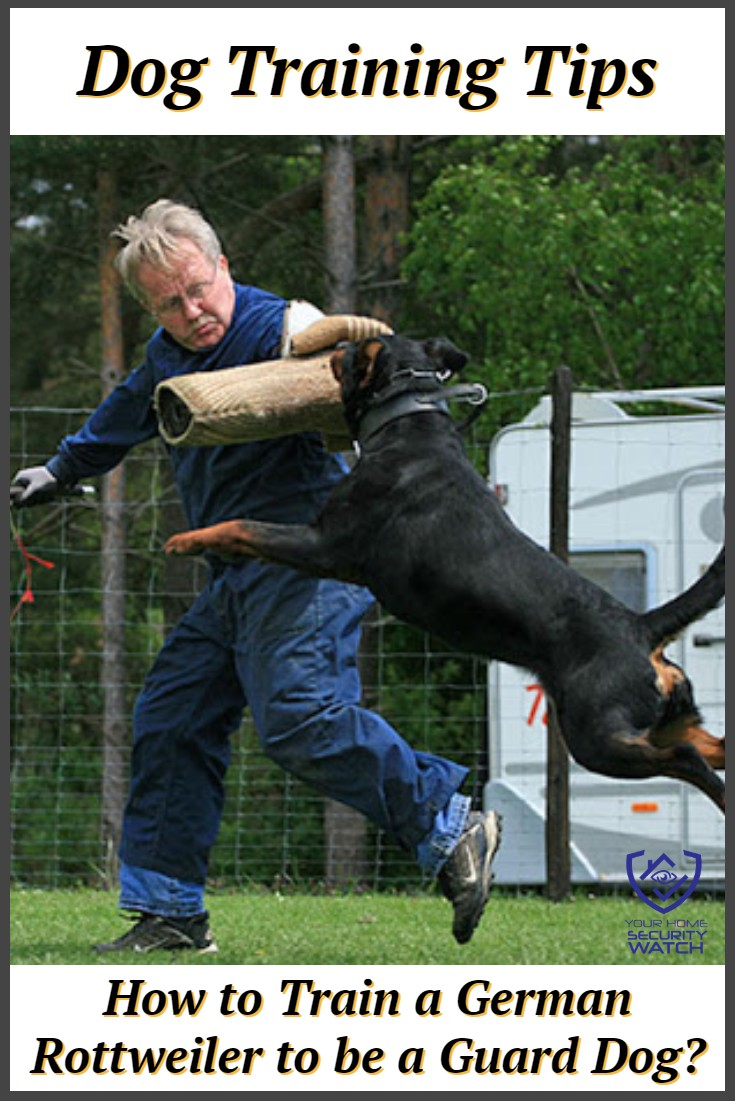 Dog Training for German Rottweiler