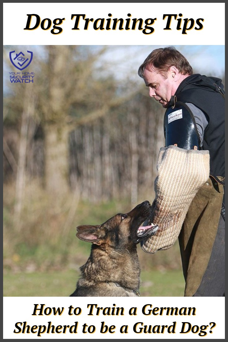 Guard Dog Training for German Shepherds