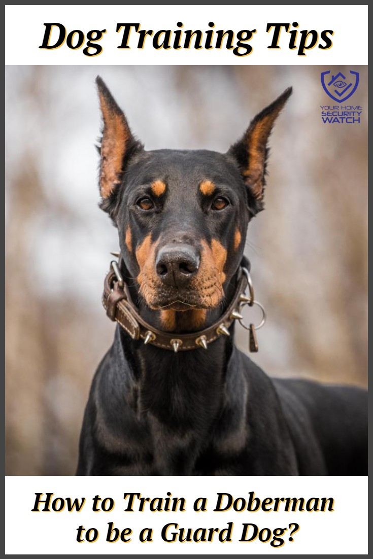 doberman as a guard dog