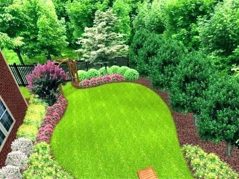 Privacy Landscaping Evergreen Trees Ideas Best For Backyard