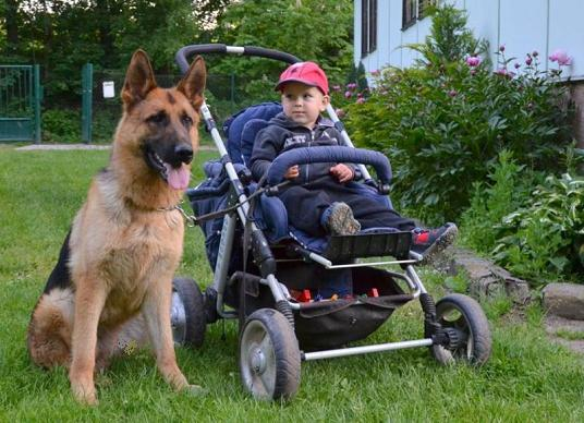Why Military Dogs Are Good Pets